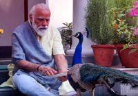 पर्यावरणः  बिहार के इन दो गांवों में इको टूरिज्म डेवलप हुआ तो राष्ट्रीय पक्षी को खुले में देखने आएंगे लोग